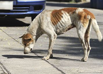 What-to-Do-About-Stray-Dogs